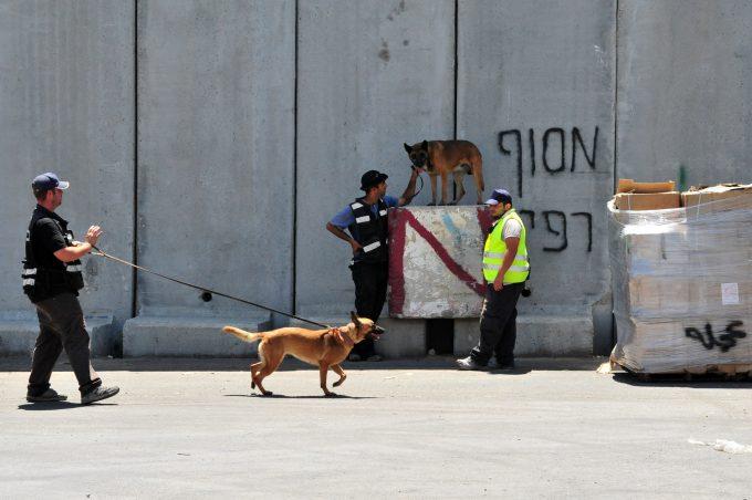 sniffer dog © Rafael Ben-ari