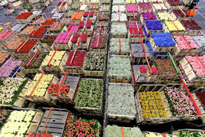 flower market auction © Beautifulblossom