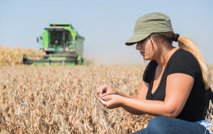 Young farmer girl examing soybean plant during harvest