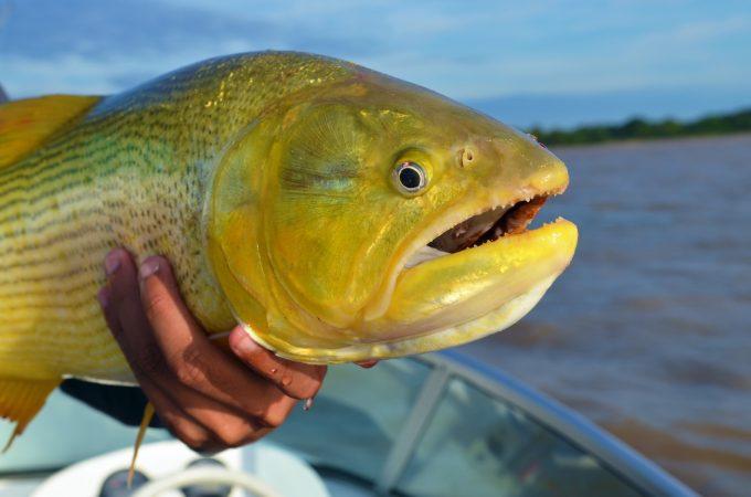 fish © Vinicius Bacarin  