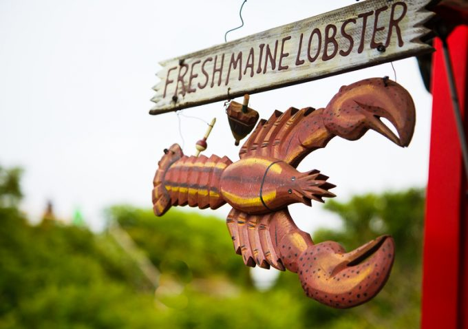 maine lobster © Darryl Brooks -